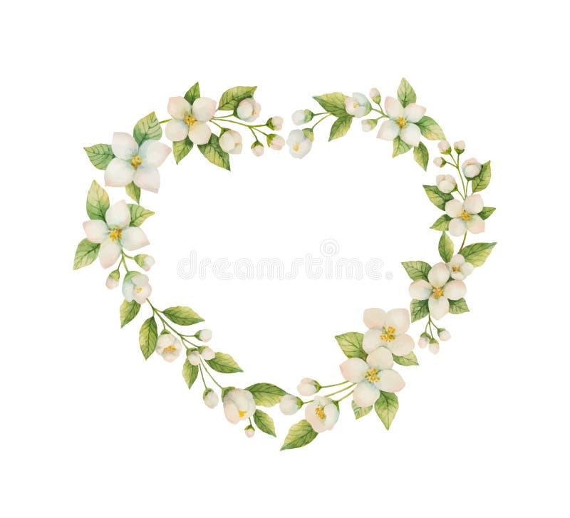 水彩以茉莉花花的形式心脏的传染媒介框架在白色背景隔绝的 皇族释放例证