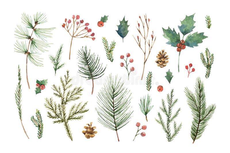 水彩传染媒介圣诞节设置与常青针叶树分支、莓果和叶子 库存例证