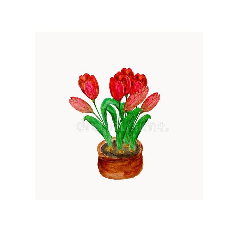 水彩例证开花在一个棕色罐的红色郁金香 向量例证