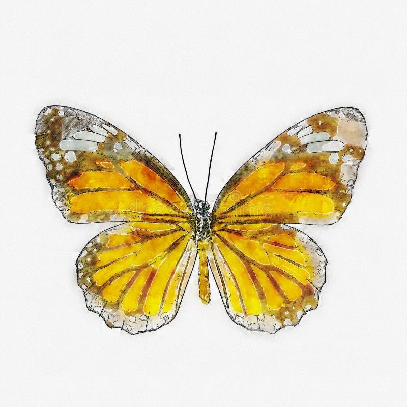 水彩共同的老虎蝴蝶 向量例证