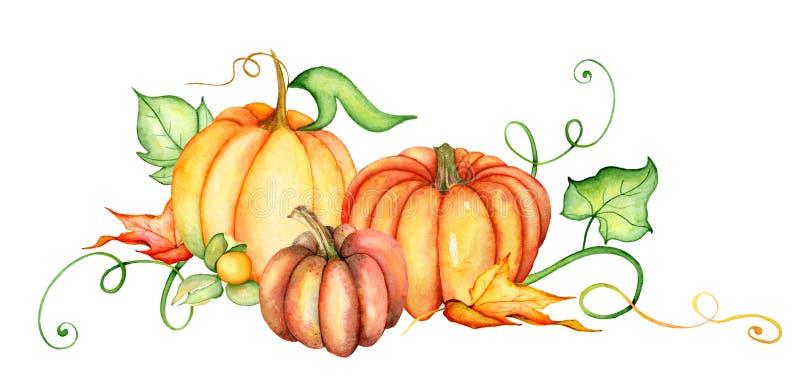 水彩南瓜和秋叶 收获构成 日愉快的感恩 象查找的画笔活性炭被画的现有量例证以图例解释者做柔和的淡色彩对传统 向量例证