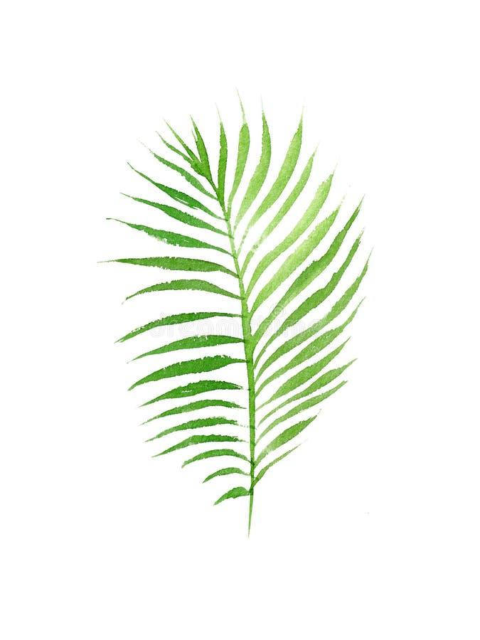 水彩可可椰子在白色背景隔绝的树叶子 向量例证