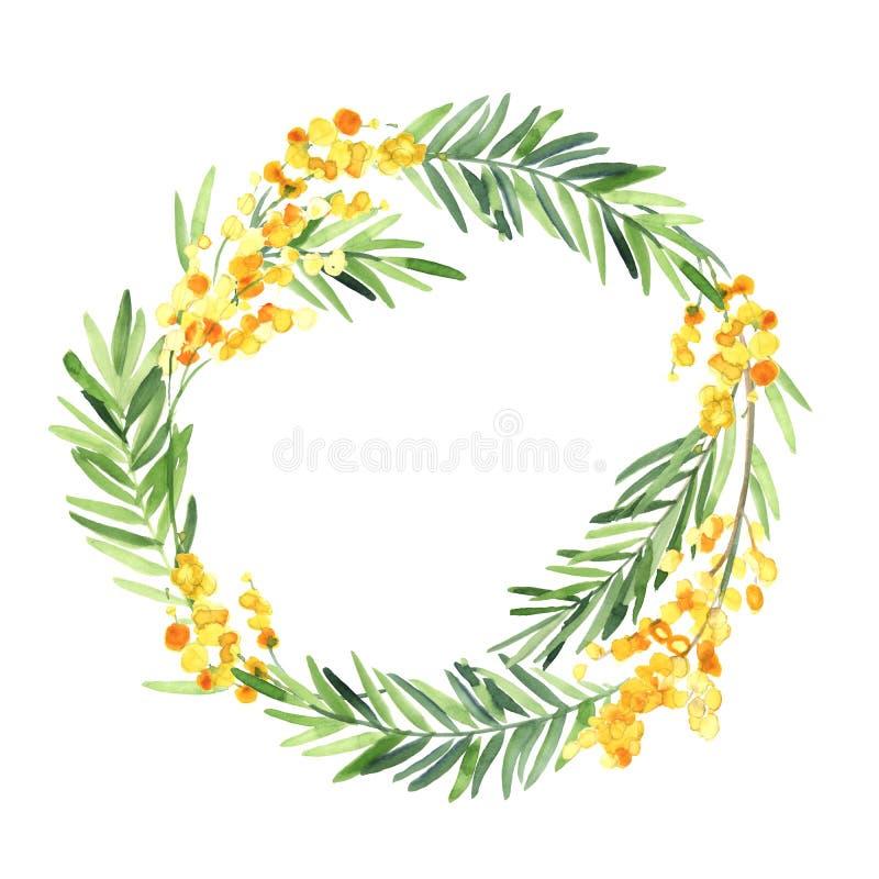 水彩含羞草在白色背景的花孤立花圈  向量例证