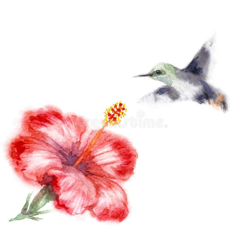 水彩哼唱着鸟和花 向量例证