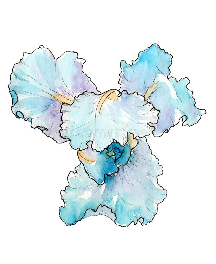水彩图片蓝色虹膜 颜色和图表 库存例证