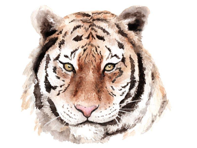 水彩图画老虎,头,棕色眼睛,剪影 库存例证
