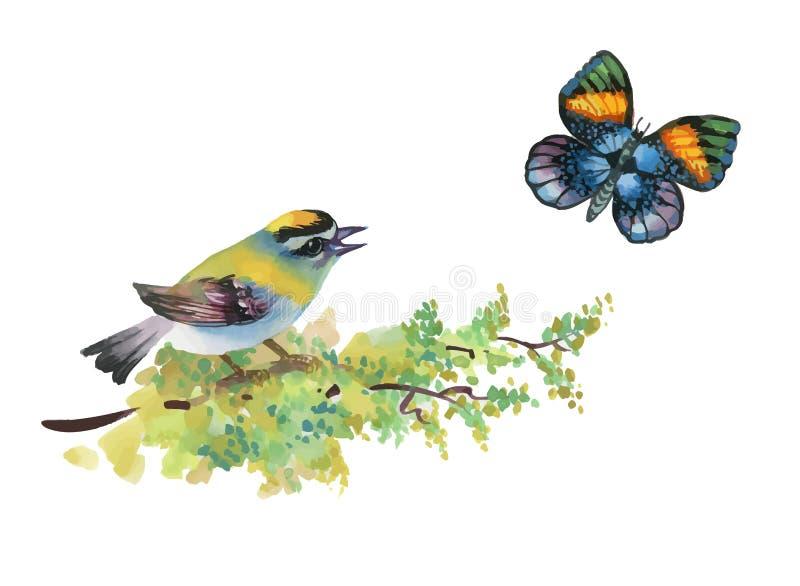 水彩图画鸟坐一只分支和蝴蝶在白色背景 皇族释放例证