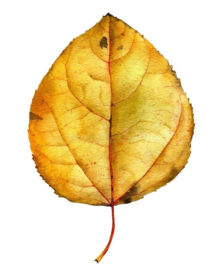 水彩图画黄色叶子 图库摄影