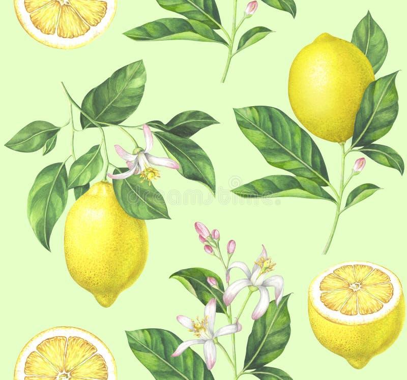 水彩在浅绿色的背景的柠檬样式 向量例证