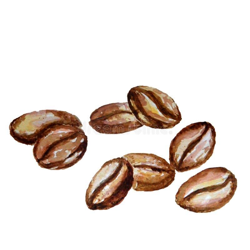 水彩在白色背景隔绝的咖啡豆 皇族释放例证