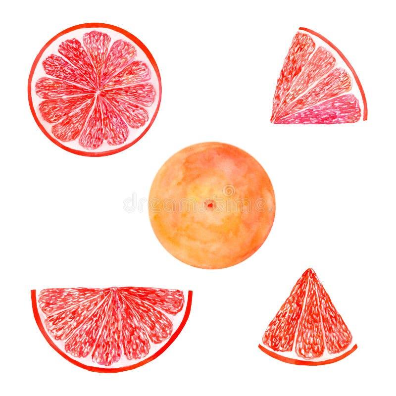 水彩在白色背景隔绝的葡萄柚集合水多的果子和切片 手画食物例证设计 向量例证