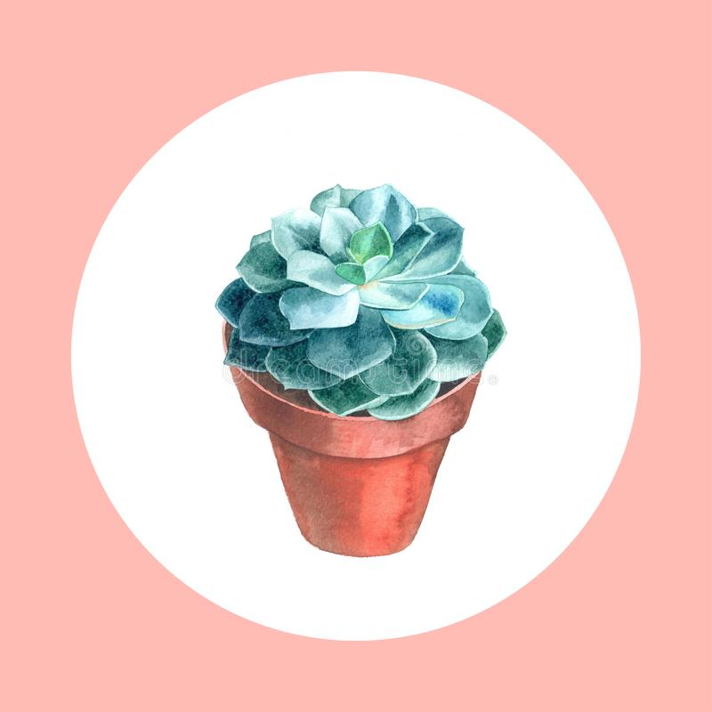 水彩多汁植物 手画花卉例证用在白色背景隔绝的绿色仙人掌 库存例证