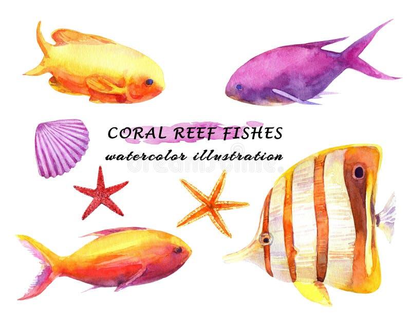 水彩套五颜六色的礁石鱼、海星和软体动物 向量例证