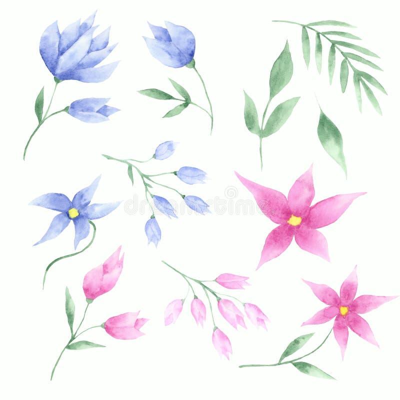 水彩套桃红色和蓝色花、郁金香和叶子 皇族释放例证