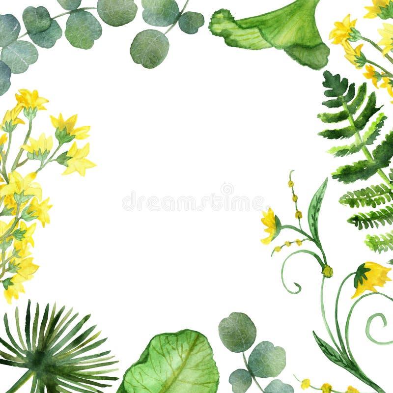 水彩套热带分支和叶子有在白色背景隔绝的黄色花的 皇族释放例证