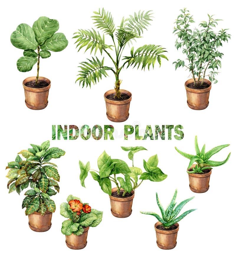 水彩室内盆栽植物 库存例证