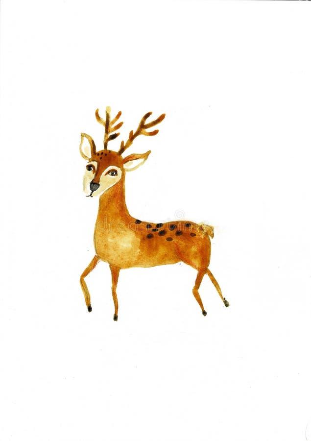 水彩小鹿 在白色背景隔绝的手画野生动物 设计的现实男性休闲地,印刷品 皇族释放例证