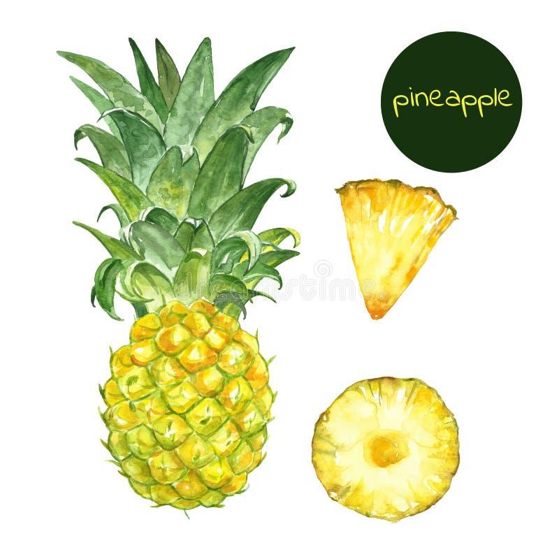 水彩异乎寻常的果子集合 手画成熟paineapple,隔绝在白色背景 夏天水多的果子 库存例证