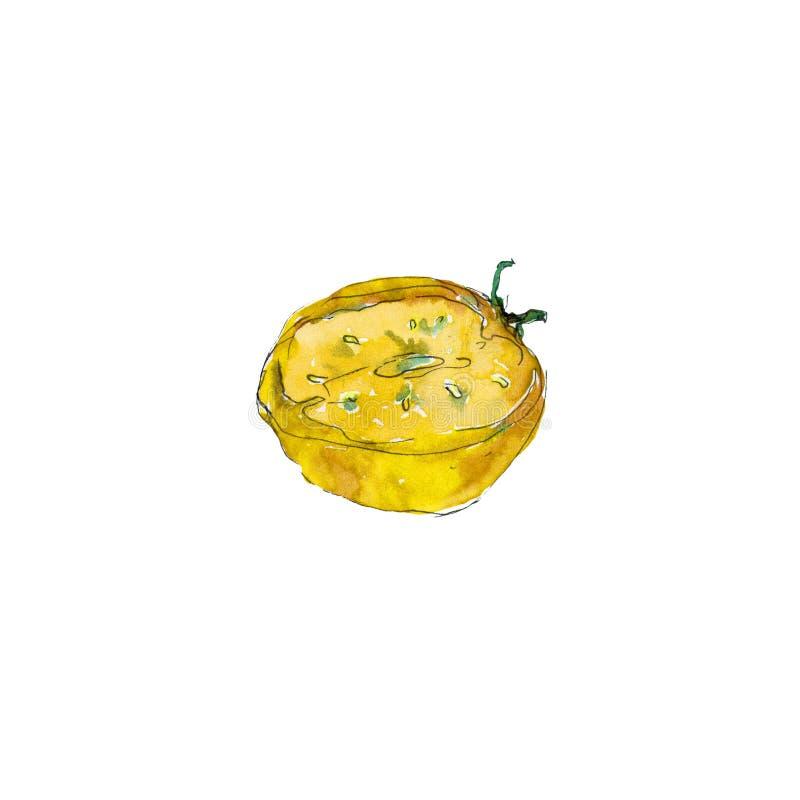 水彩成熟蕃茄菜食物 Iisolated半蕃茄蕃茄 皇族释放例证