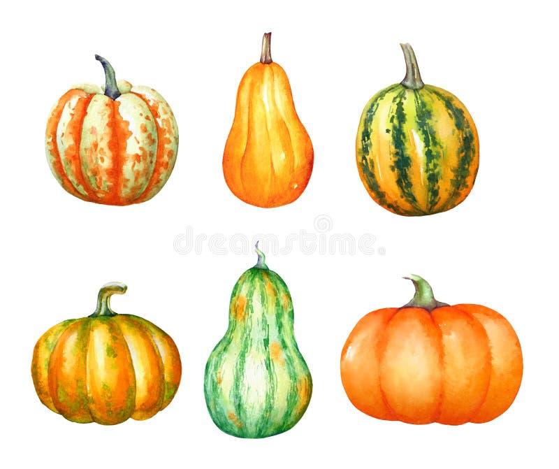 水彩手拉的五颜六色的南瓜的一汇集 向量例证