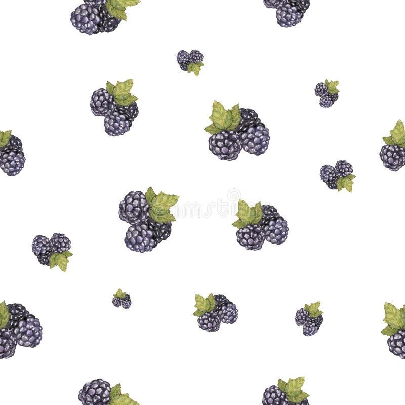 水彩手拉的黑莓集合无缝的样式 库存例证