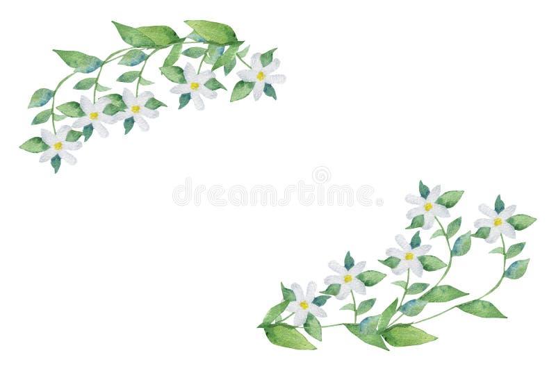 水彩手画透雕细工框架香柠檬植物,有在分支的白花的与绿色叶子 向量例证