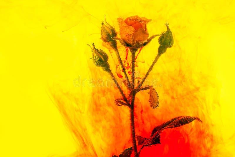 水彩摘要红色玫瑰绿色桃红色里面花束花背景黄色丙烯酸酯 皇族释放例证