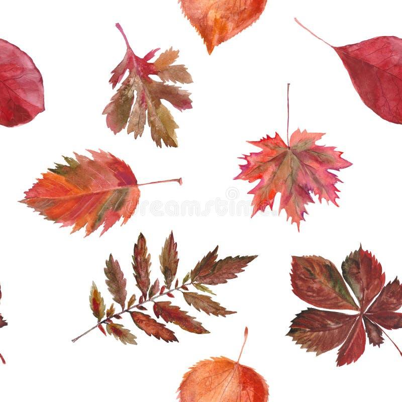 水彩无缝的背景叶子 ?? 白色和红色 皇族释放例证