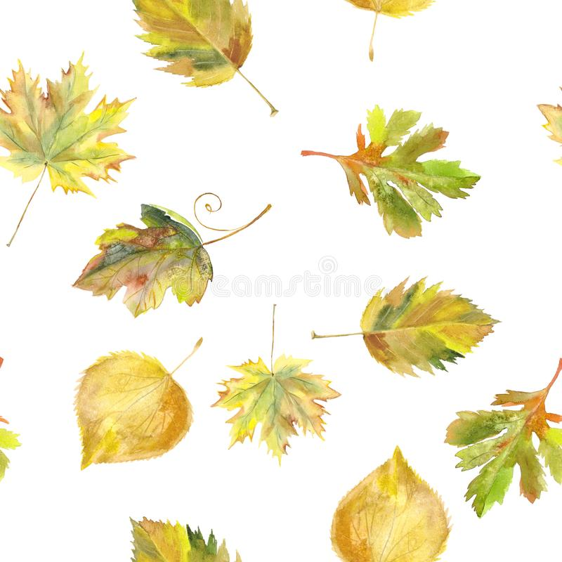 水彩无缝的背景叶子 白色的秋天黄色和 向量例证