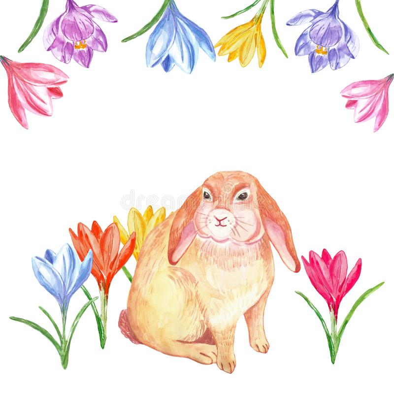 水彩春天复活节的假日横幅用逗人喜爱的兔子和五颜六色的番红花花,被隔绝 库存例证