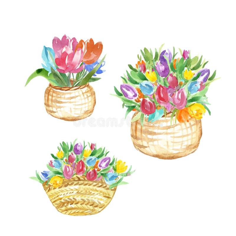 水彩春天季节性花例证 在白色背景隔绝的篮子的手画五颜六色的郁金香 库存例证