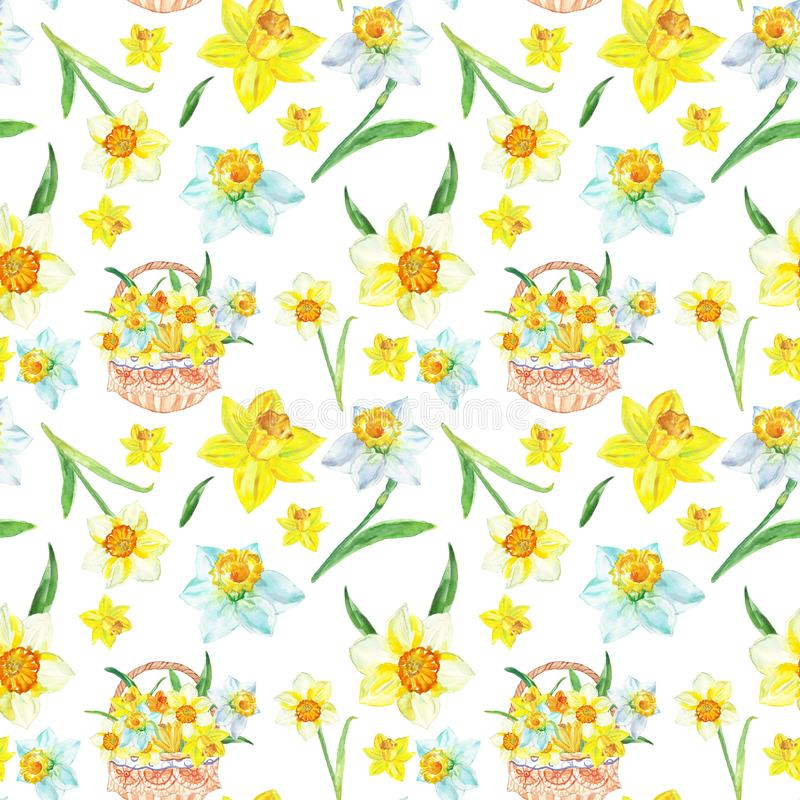 水彩春天花卉样式以与黄水仙花的黄色在白色背景 植物的手画例证 库存例证