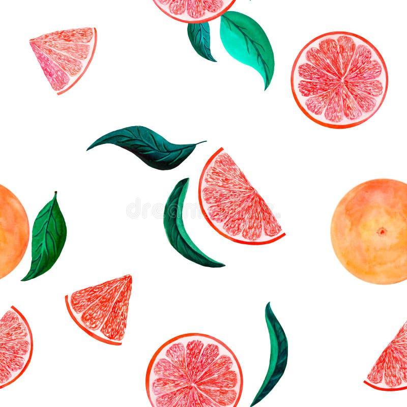 水彩柑橘样式葡萄柚,与分支,在白色的植物的自然例证的花卉无缝的样式 免版税库存图片
