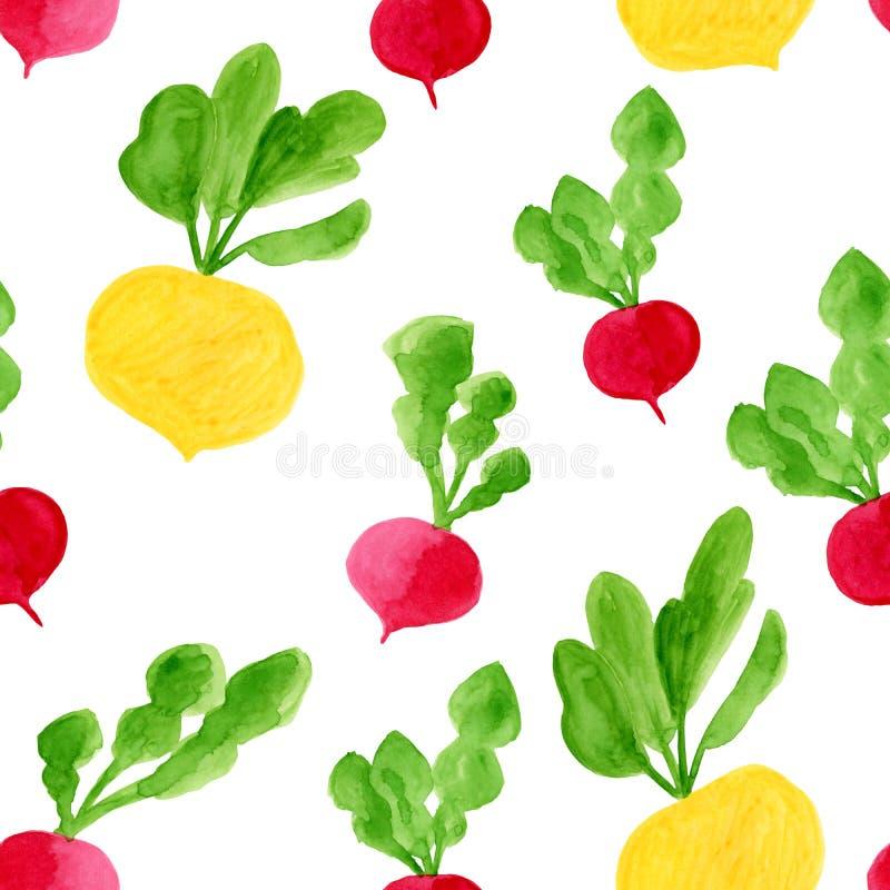 水彩根菜类无缝的样式 手拉的生态饮食食物背景例证 黄色白萝卜,萝卜, 库存图片