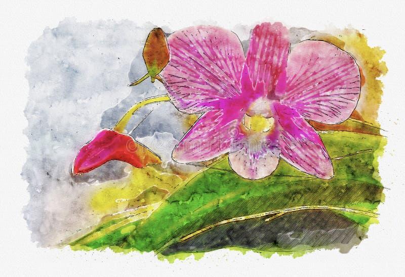水彩桃红色兰花花例证样式  向量例证