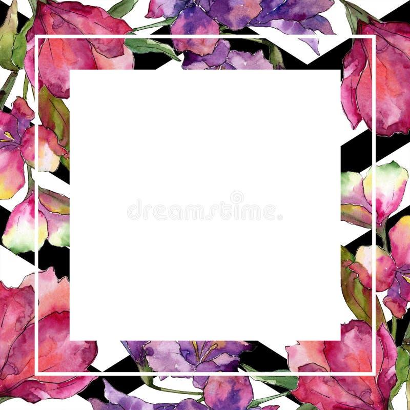 水彩桃红色和紫色德国锥脚形酒杯花 花卉植物的花 框架边界装饰品正方形 皇族释放例证