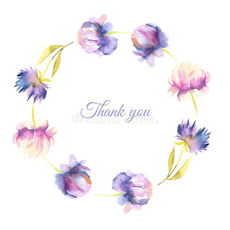 水彩桃红色和紫色牡丹和翠菊缠绕,贺卡模板 向量例证