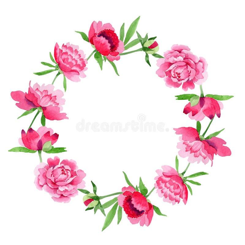 水彩桃红色牡丹花 花卉植物的花 框架边界装饰品正方形 皇族释放例证