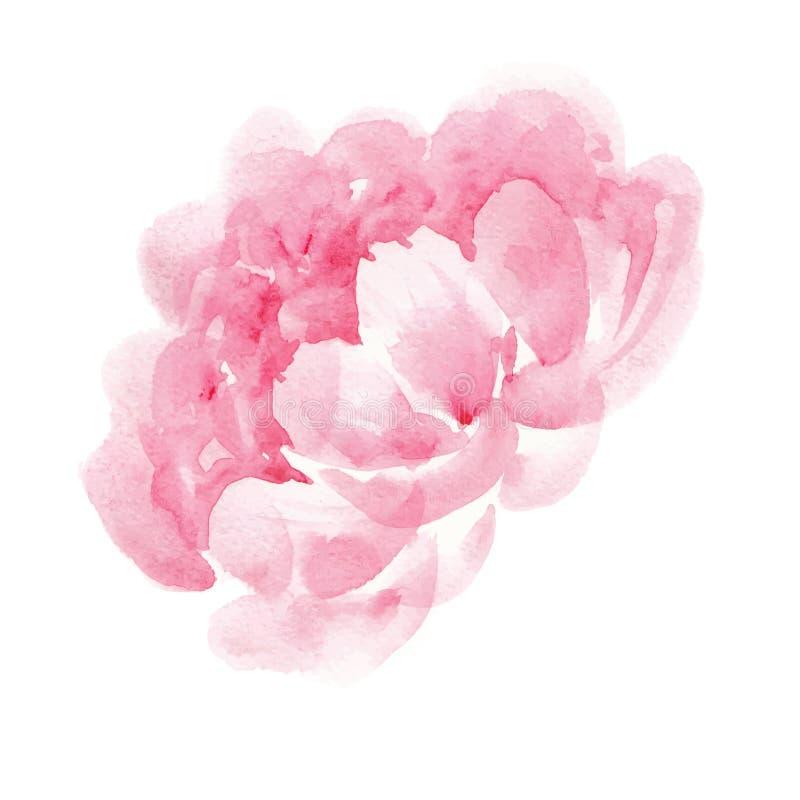 水彩桃红色牡丹 向量例证
