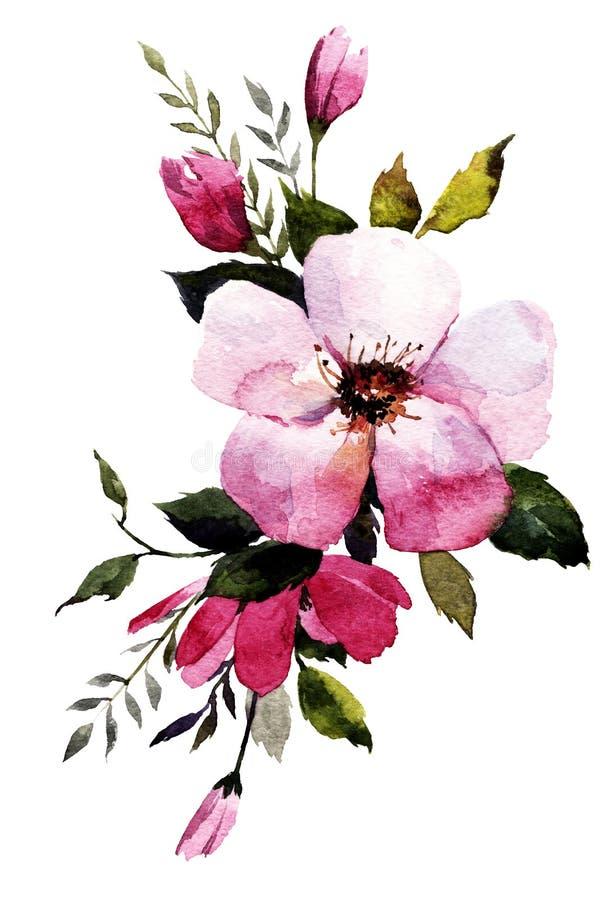 水彩桃红色花,叶子的构成 皇族释放例证