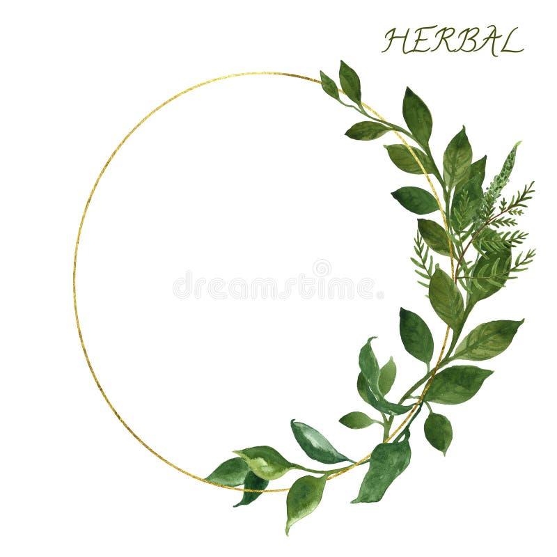 水彩植物的金黄框架用狂放的草本和绿色叶子在白色背景 婚姻的邀请设计模板 皇族释放例证