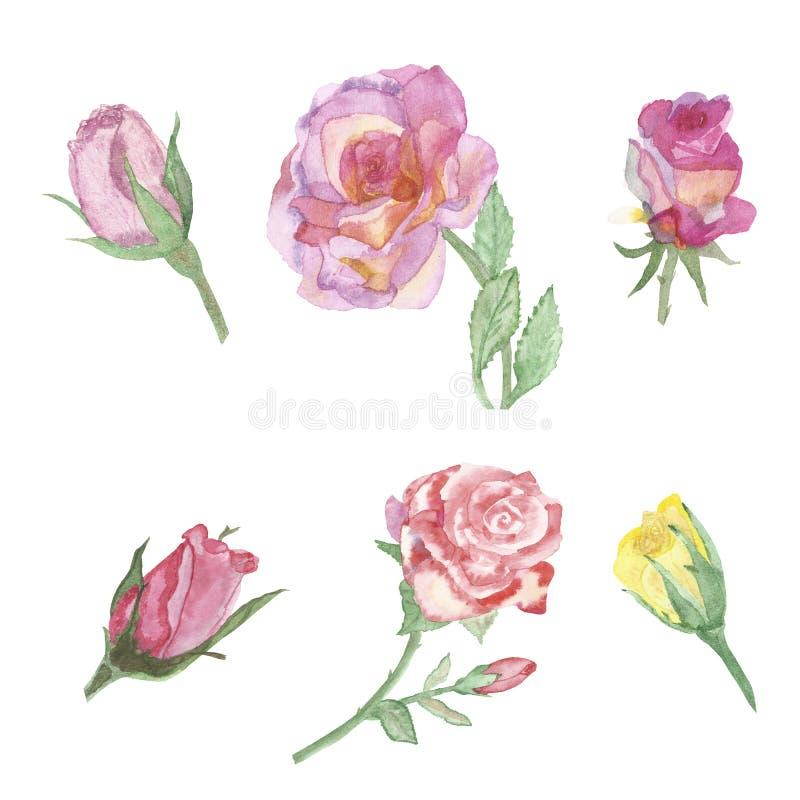 水彩横幅,在白色背景隔绝的可爱的豪华的玫瑰 手画为情人节快乐 祝贺clos 向量例证