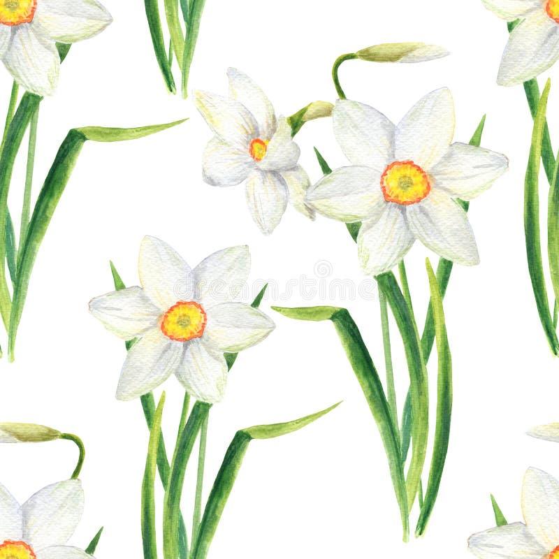 水彩水仙开花无缝的样式 在白色背景隔绝的手拉的黄水仙花束例证 r 库存例证