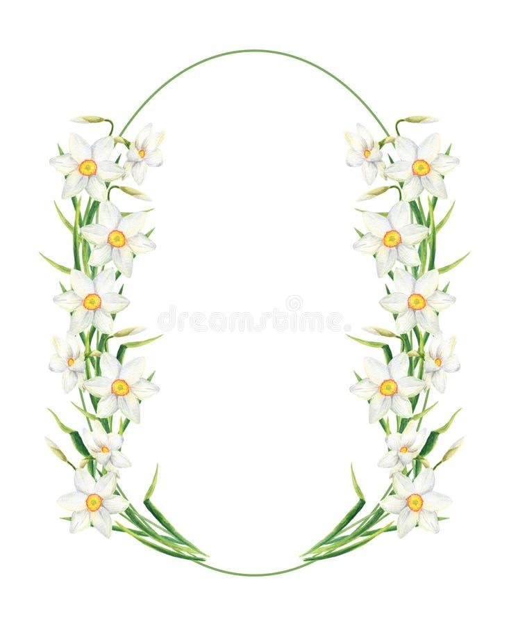 水彩水仙花圆的框架 在白色背景隔绝的手拉的黄水仙花圈例证 ?? 皇族释放例证