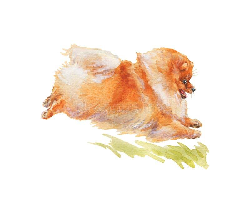 水彩波美拉尼安斑狗 库存照片