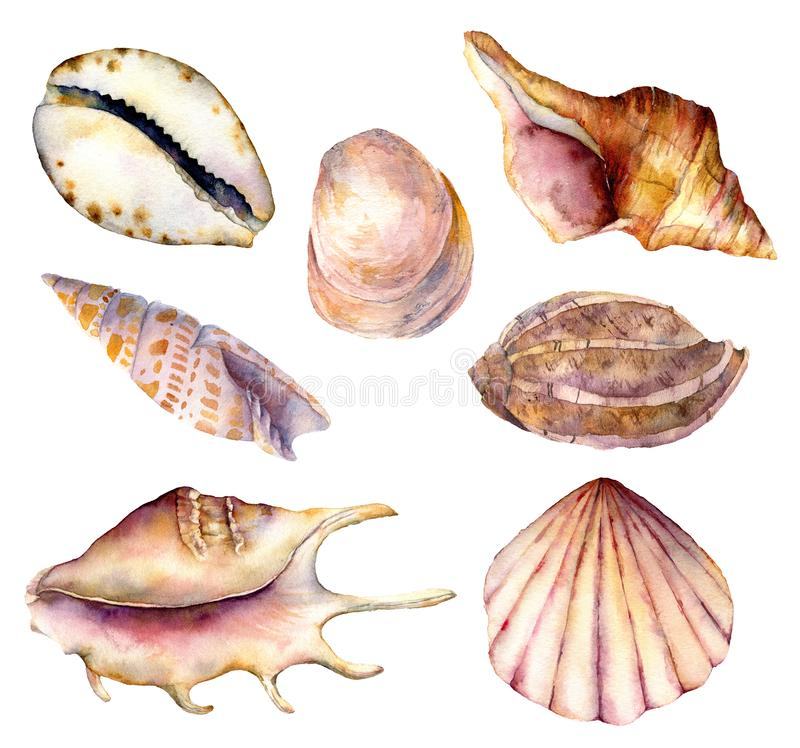 水彩海壳集合 在白色背景隔绝的手画水下的元素例证 ?? 皇族释放例证