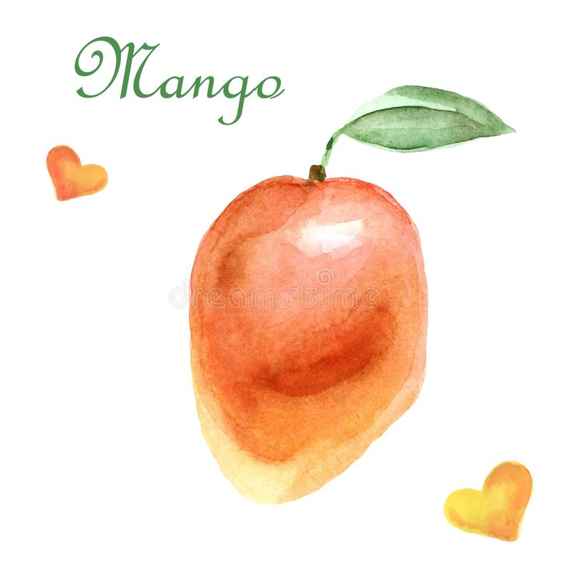 水彩热带例证用在白色背景的芒果 向量例证
