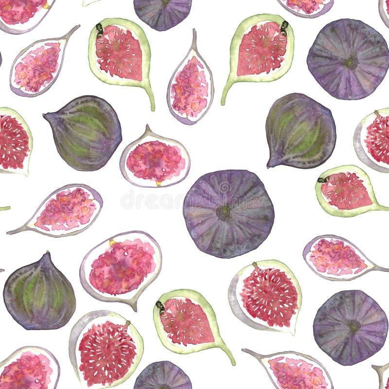 水彩热带无花果果子样式 向量例证