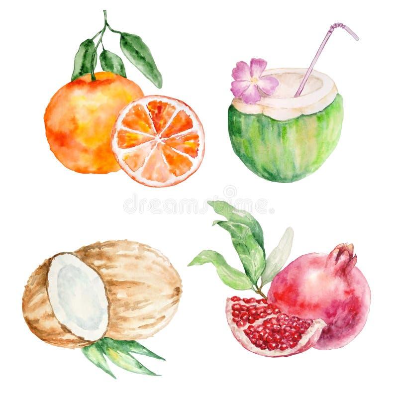 水彩热带水果 库存例证