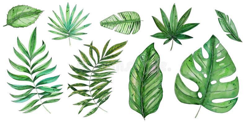 水彩热带花卉例证设置与绿色叶子 皇族释放例证